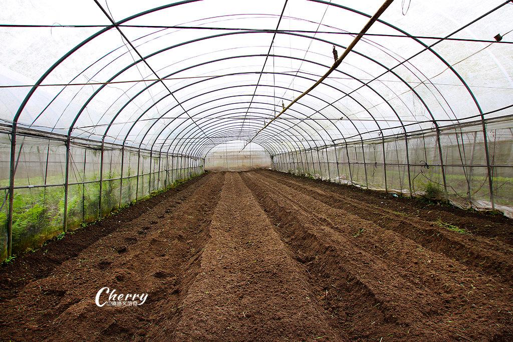 20171122144605_75 嘉義|中埔立岱有機農園,自產自銷當季好蔬果