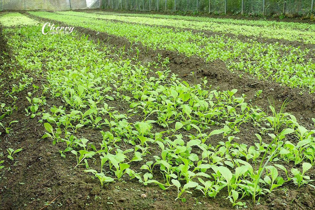 20171122144612_17 嘉義|中埔立岱有機農園,自產自銷當季好蔬果