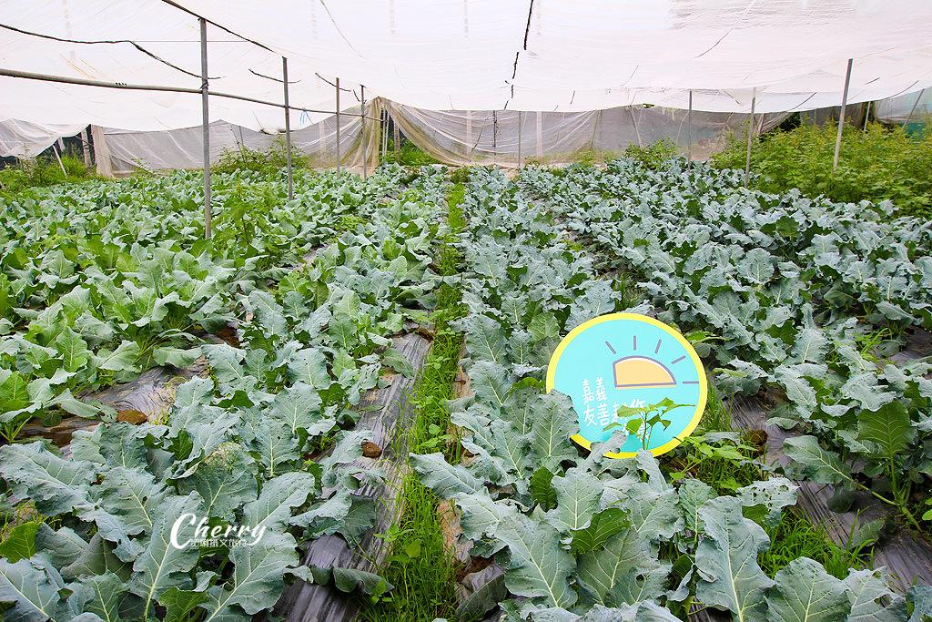 20171122144617_54 嘉義|中埔立岱有機農園,自產自銷當季好蔬果