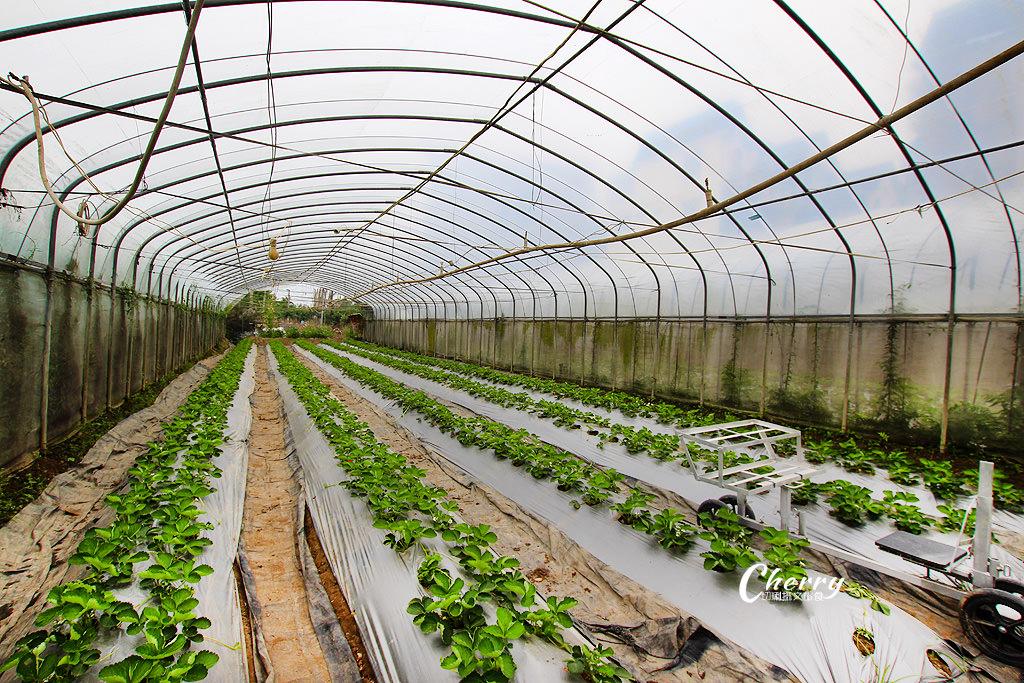20171122144623_40 嘉義|中埔立岱有機農園,自產自銷當季好蔬果