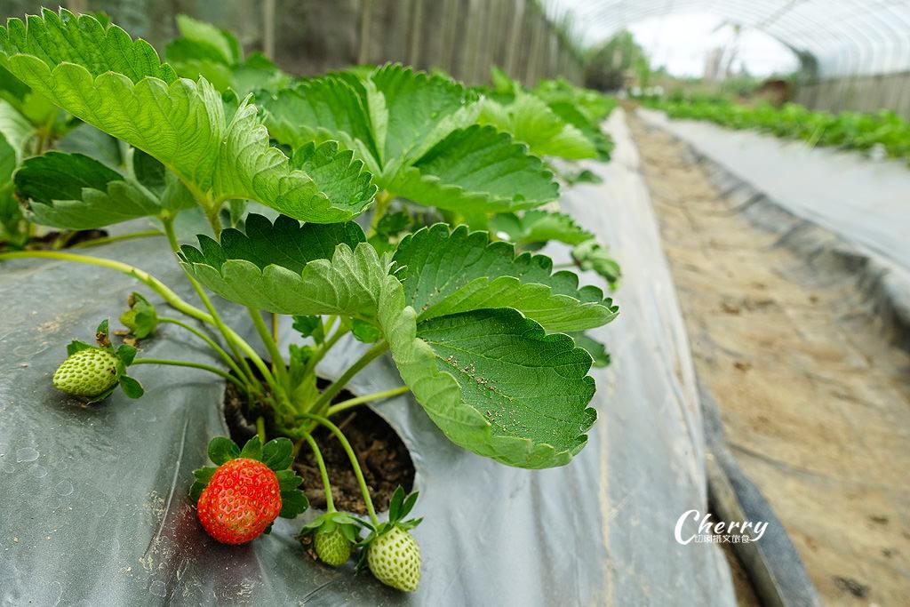 20171122144626_40 嘉義|中埔立岱有機農園,自產自銷當季好蔬果