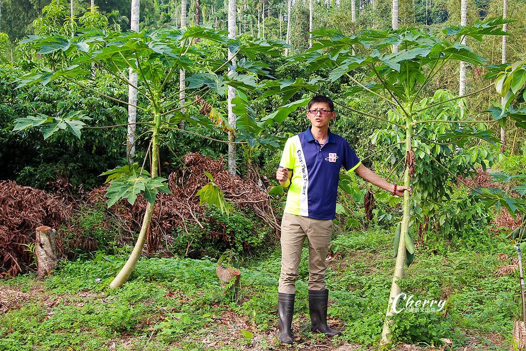20171122161849_80 嘉義|竹崎阿舍農園,來去友善耕作的田園採果樂活