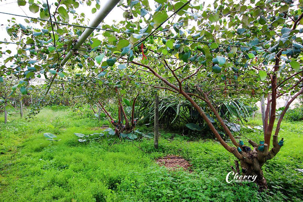 20171122161901_31 嘉義|竹崎阿舍農園,來去友善耕作的田園採果樂活