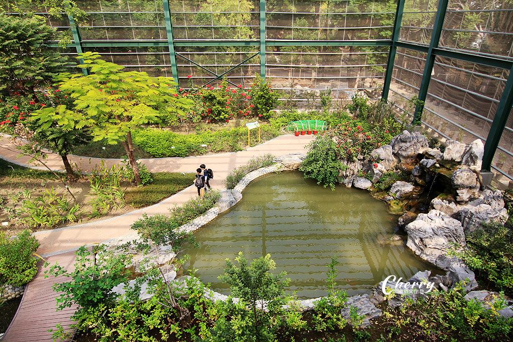 20171228072333_76 高雄|金獅湖蝴蝶園,近距離看蝴蝶翩翩飛舞與生態