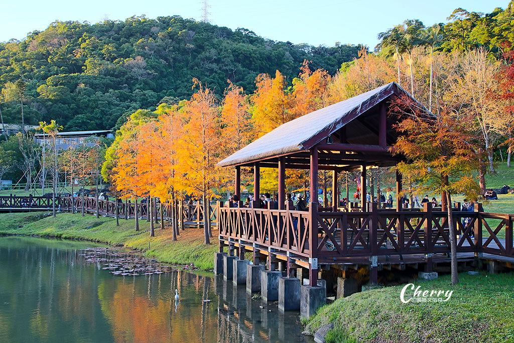 20180118013448_26 台北|原住民公園落羽松小園地,湖岸美景彷如置身於國外