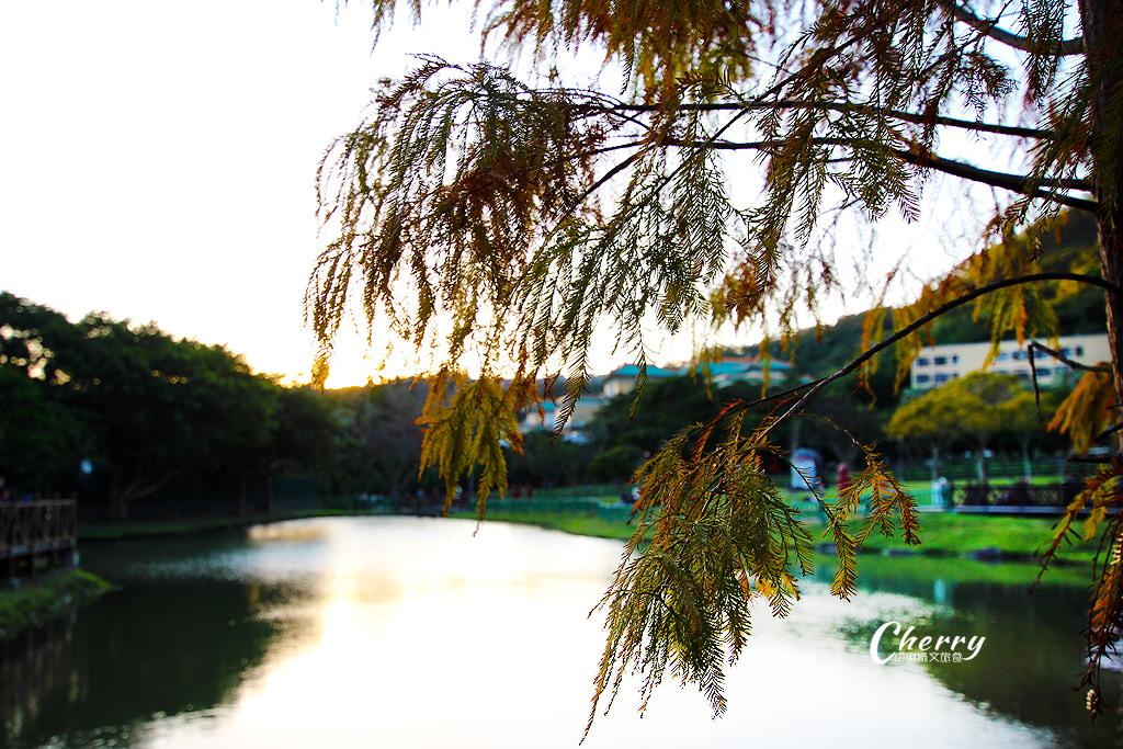 20180118013458_5 台北|原住民公園落羽松小園地,湖岸美景彷如置身於國外