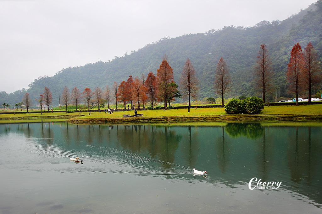 宜蘭蜊埤湖落羽松