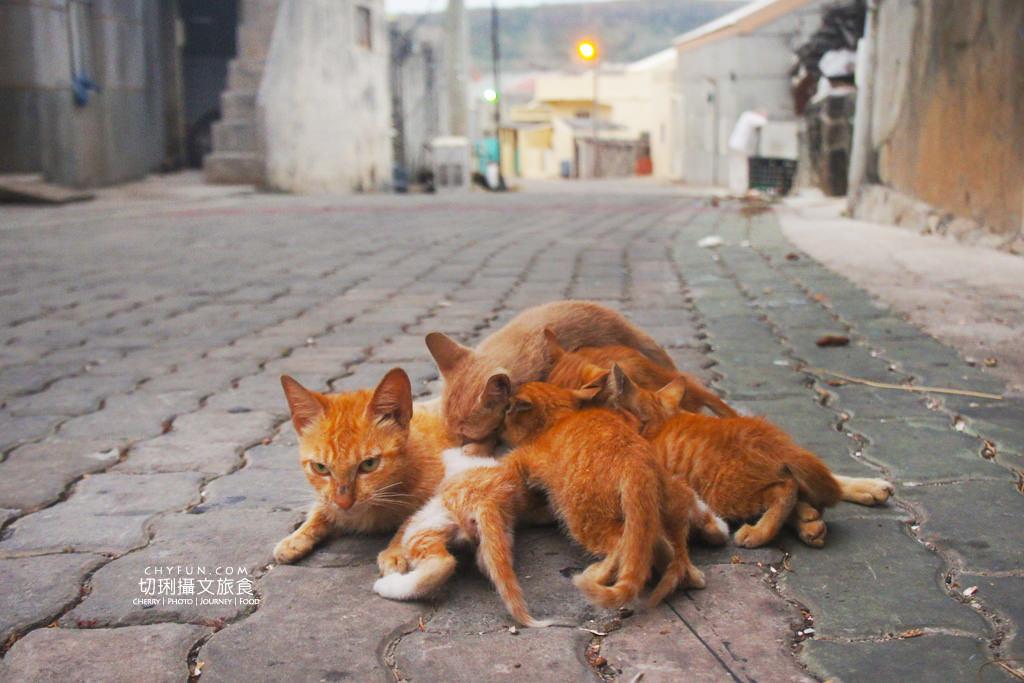 20180428043857_63 澎湖 第七大島虎井,你未知的虎井旅遊資訊,來漁村慢活看貓星人