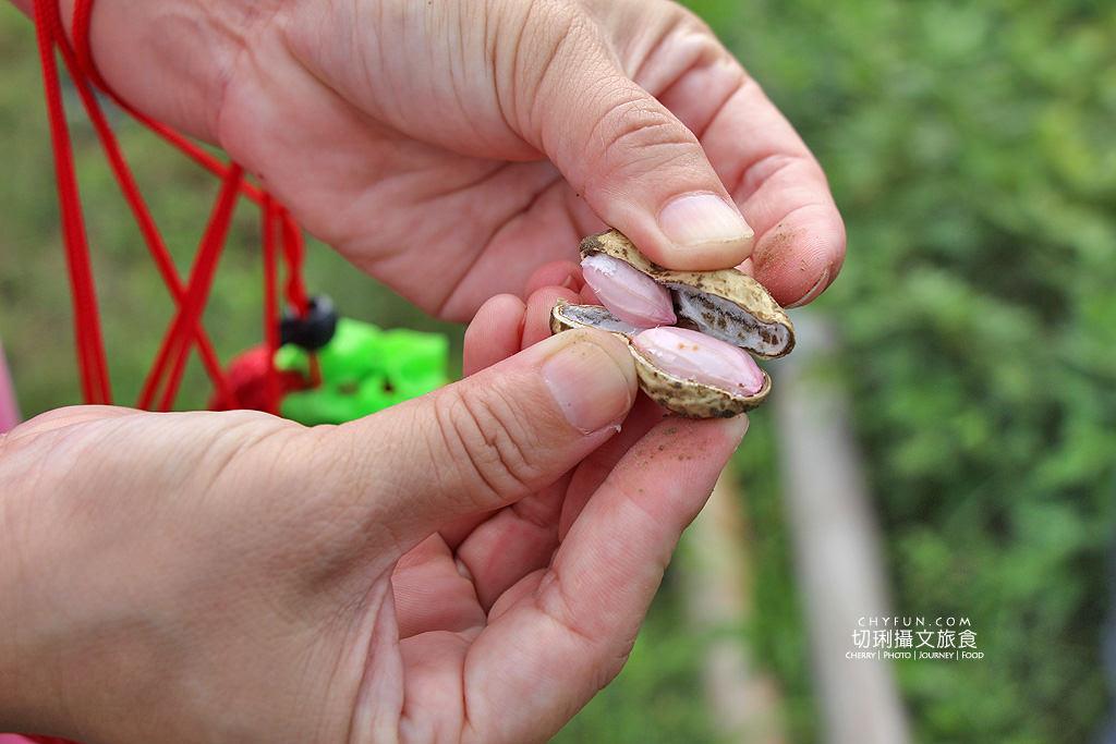 20180707044435_54 台南|佳里漳洲旅遊怎麼玩,大手牽小手農遊趣味多