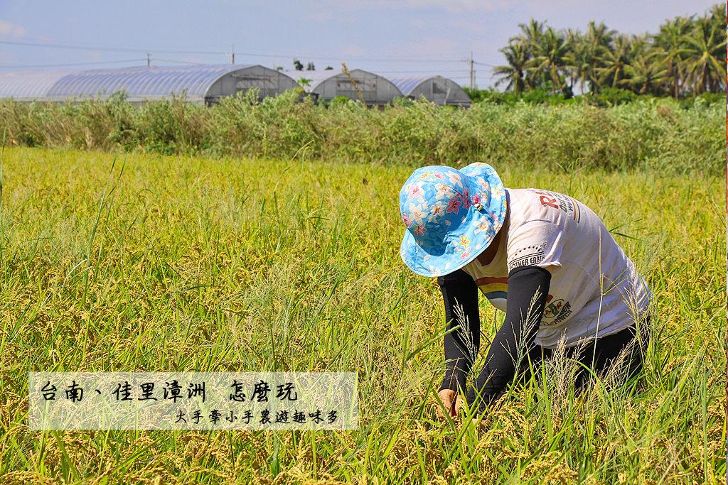 20180711212519_6 台南|佳里漳洲旅遊怎麼玩,大手牽小手農遊趣味多