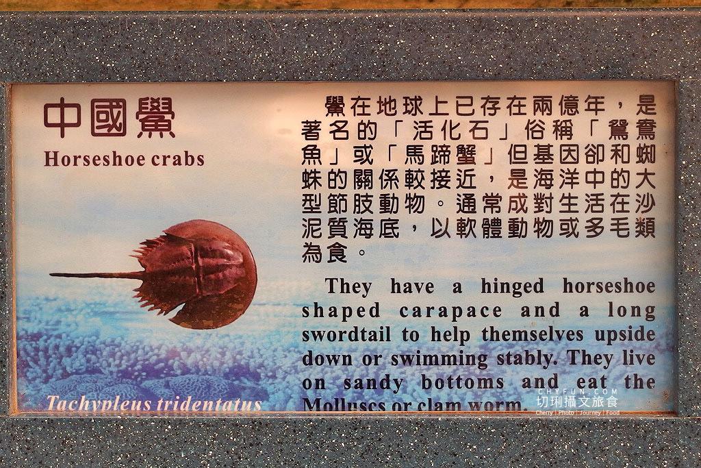 20180821233224_47 澎湖|室內看動態海洋生物,澎湖水族館寓教娛樂別錯過
