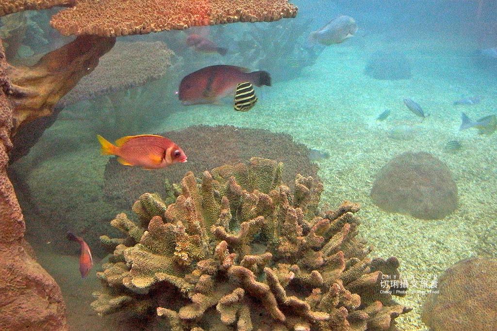 20180821233252_9 澎湖|室內看動態海洋生物,澎湖水族館寓教娛樂別錯過