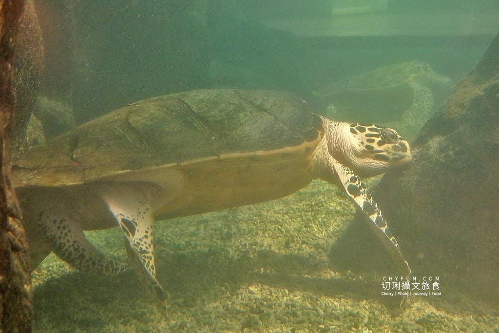 20180821233311_78 澎湖|室內看動態海洋生物,澎湖水族館寓教娛樂別錯過