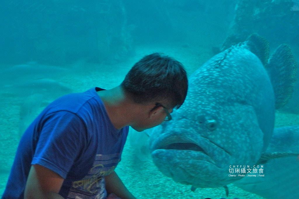 20180821233431_41 澎湖|室內看動態海洋生物,澎湖水族館寓教娛樂別錯過