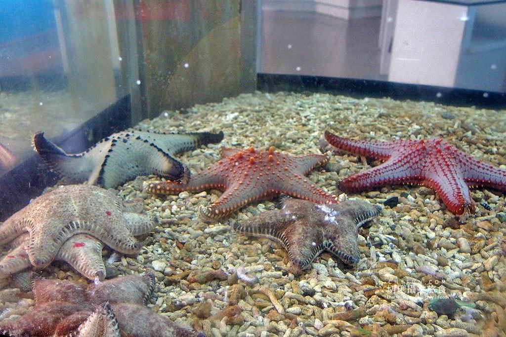 20180821233446_41 澎湖|室內看動態海洋生物,澎湖水族館寓教娛樂別錯過