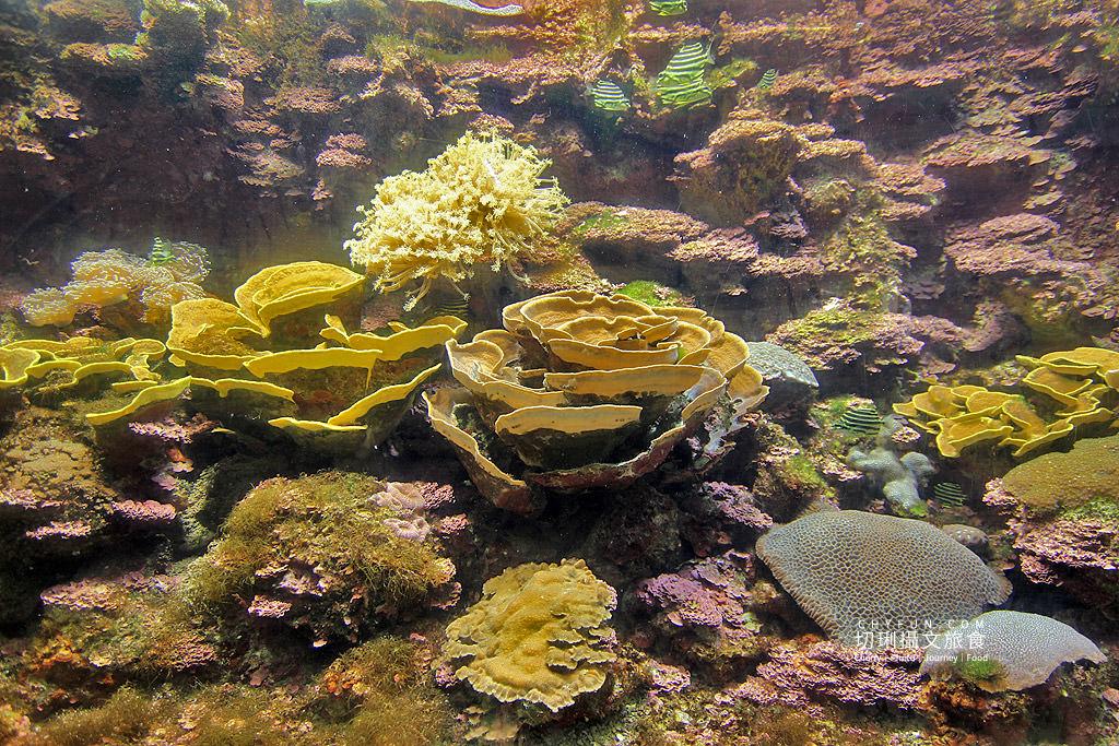 20180822221518_82 澎湖|澎湖水族館重新開幕,美麗藍色海洋世界再現