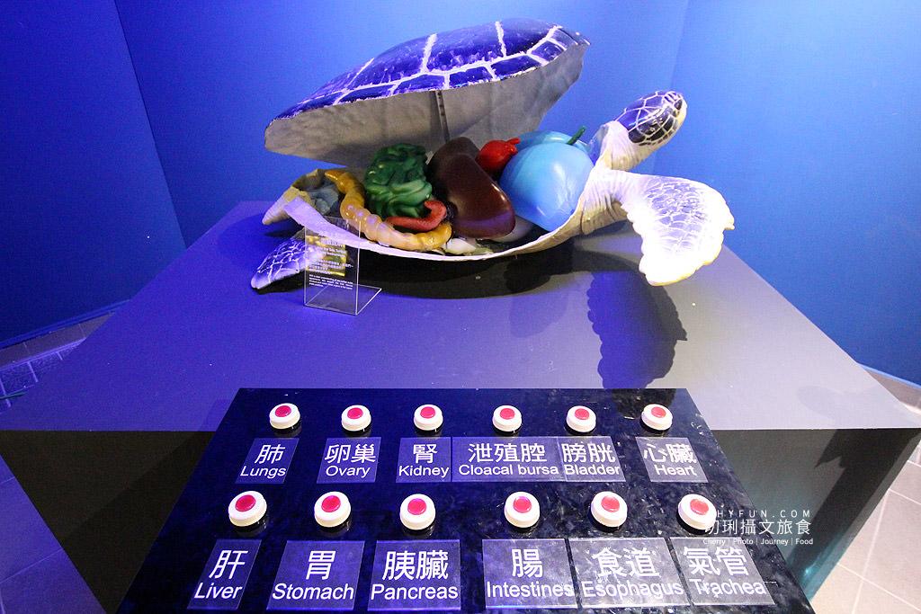 20180822221528_45 澎湖|澎湖水族館重新開幕,美麗藍色海洋世界再現