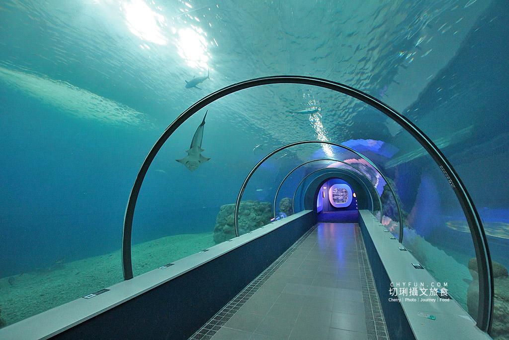 20180822221535_72 澎湖|澎湖水族館重新開幕,美麗藍色海洋世界再現