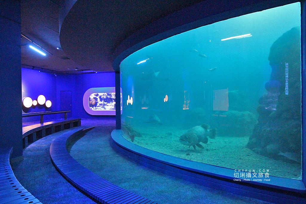 20180822221609_83 澎湖|澎湖水族館重新開幕,美麗藍色海洋世界再現