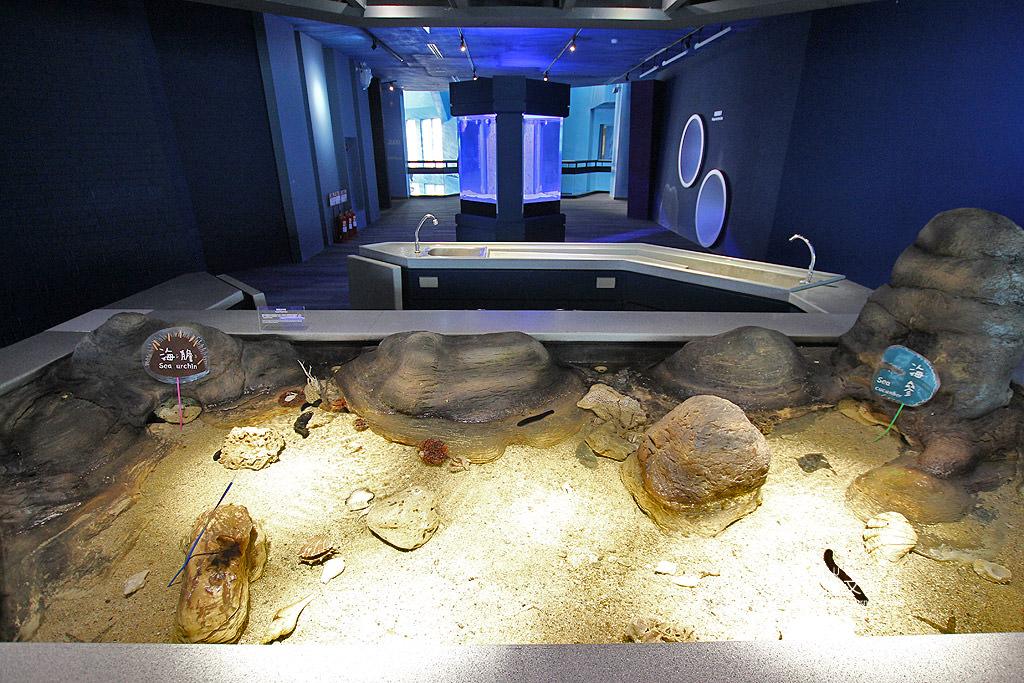 20180822221637_94 澎湖|澎湖水族館重新開幕,美麗藍色海洋世界再現
