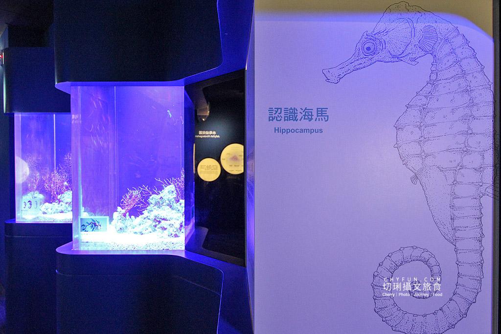 20180822221653_73 澎湖|澎湖水族館重新開幕,美麗藍色海洋世界再現