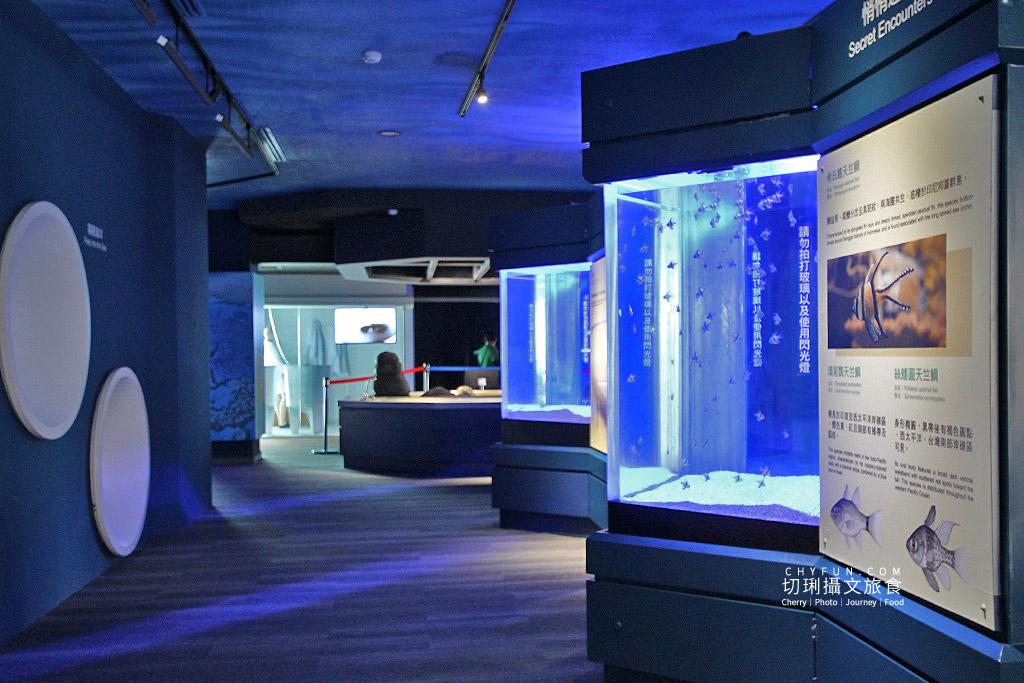 20180822221837_91 澎湖|澎湖水族館重新開幕,美麗藍色海洋世界再現