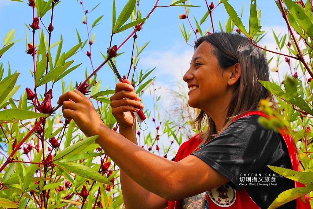 20181101043748_19 嘉義|阿里山茶山部落生態農遊,特色漁獵蜜餞新鮮玩