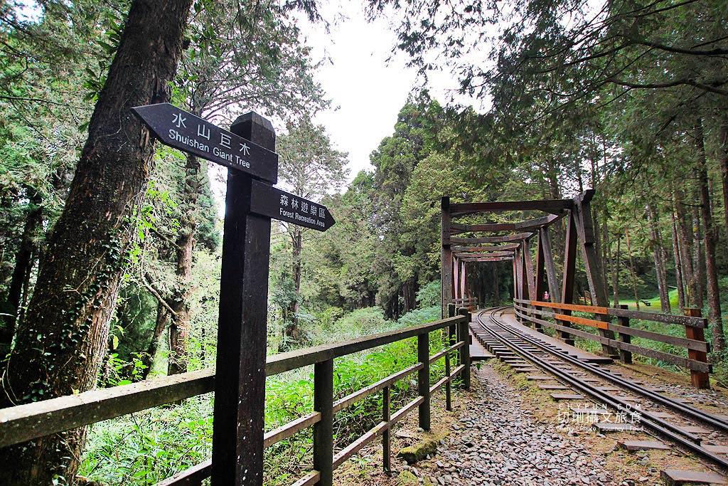 嘉義阿里山水山巨木步道