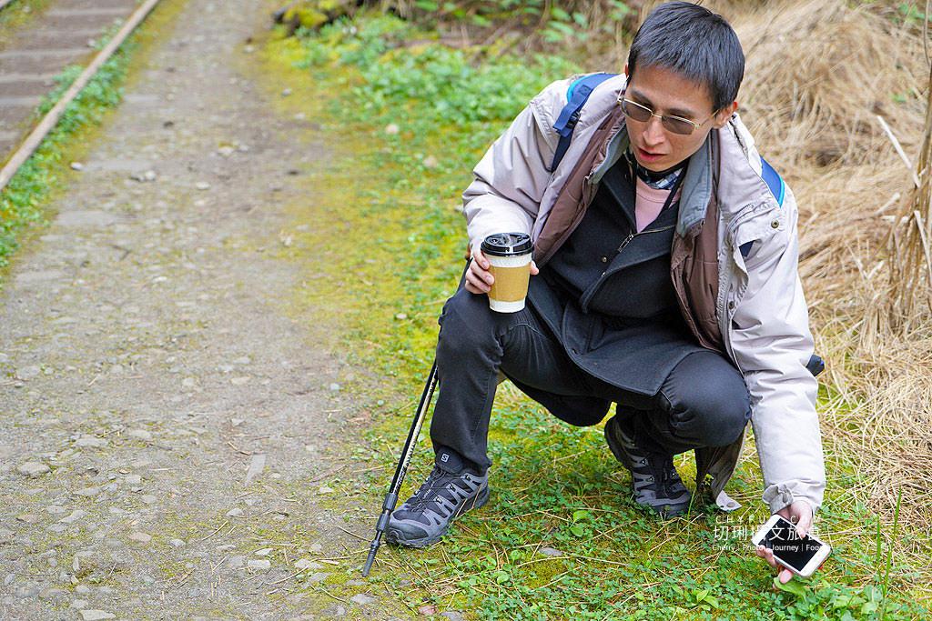 20190103235158_93 嘉義 阿里山水山巨木步道秘境,尋幽漫遊觀賞巨木風采與龍貓樹洞