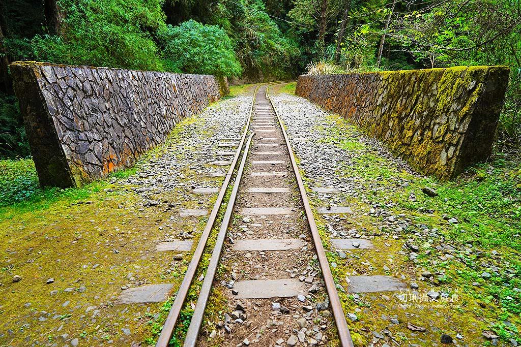 20190103235206_90 嘉義 阿里山水山巨木步道秘境,尋幽漫遊觀賞巨木風采與龍貓樹洞