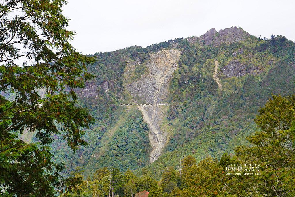 20190103235239_51 嘉義 阿里山水山巨木步道秘境,尋幽漫遊觀賞巨木風采與龍貓樹洞