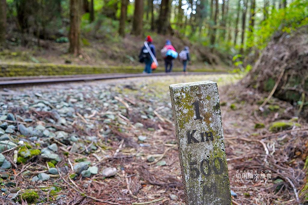 20190103235336_19 嘉義 阿里山水山巨木步道秘境,尋幽漫遊觀賞巨木風采與龍貓樹洞