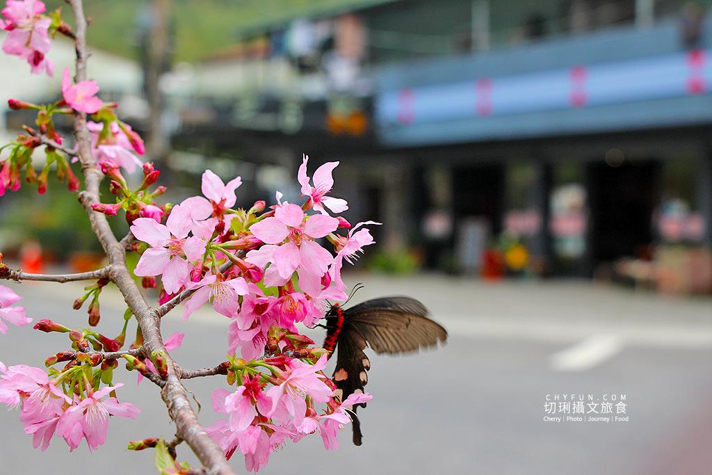 20190320005246_25 嘉義|阿里山賞櫻正旺,櫻花季二日遊美食美景趣