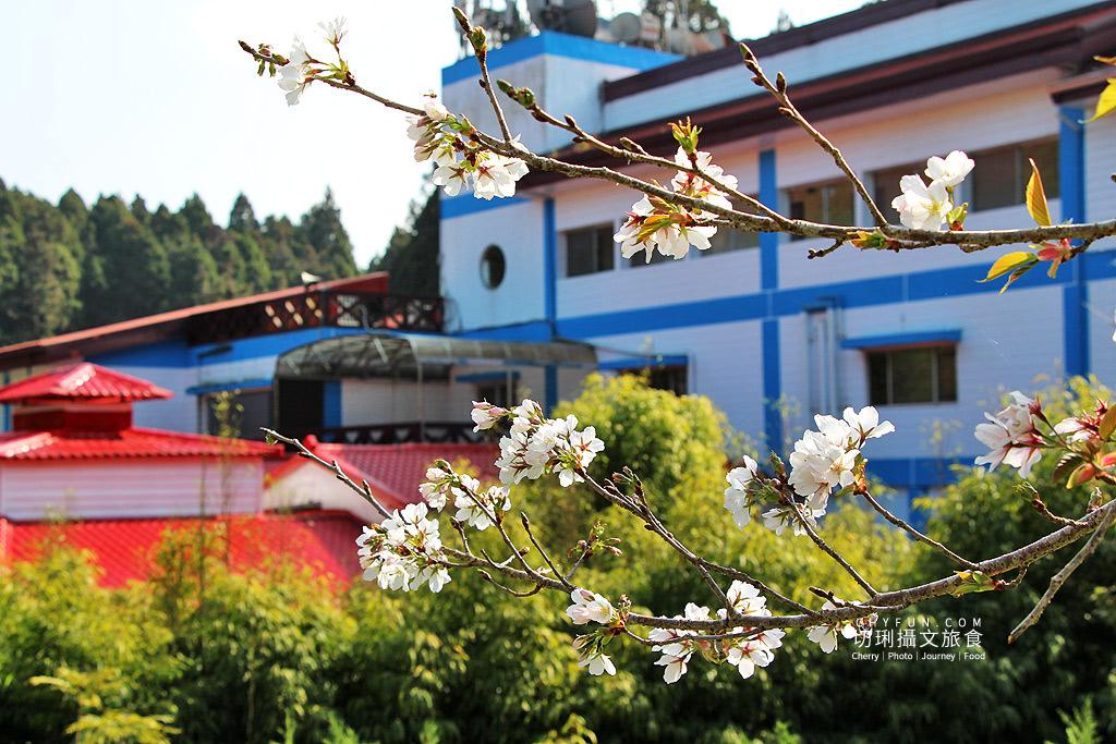 20190320005251_2 嘉義|阿里山賞櫻正旺,櫻花季二日遊美食美景趣