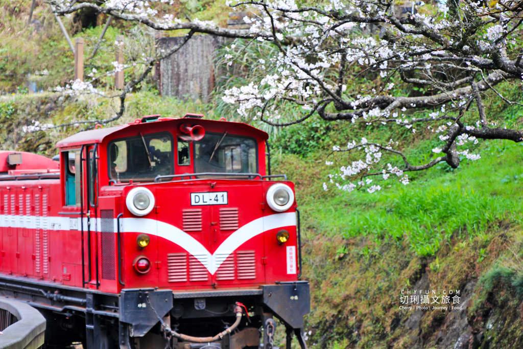 20190320005300_74 嘉義|阿里山賞櫻正旺,櫻花季二日遊美食美景趣