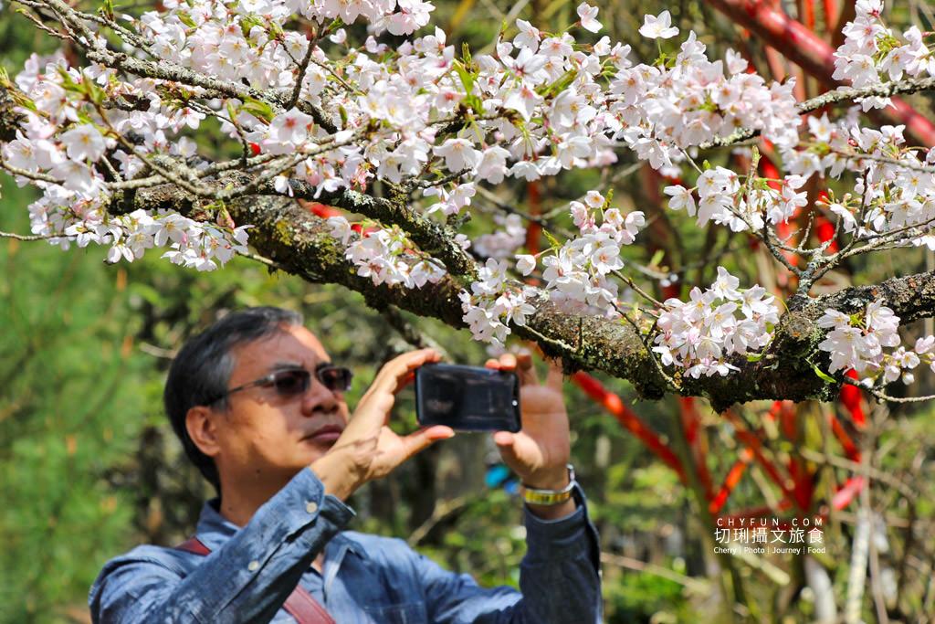 20190320005306_51 嘉義|阿里山賞櫻正旺,櫻花季二日遊美食美景趣