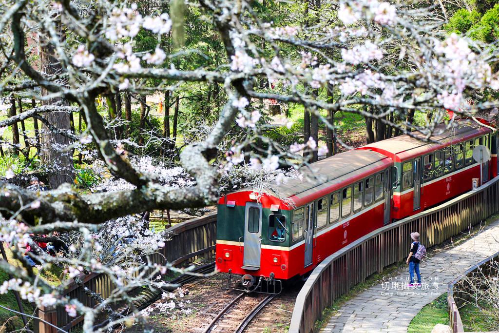 20190320005316_60 嘉義|阿里山賞櫻正旺,櫻花季二日遊美食美景趣