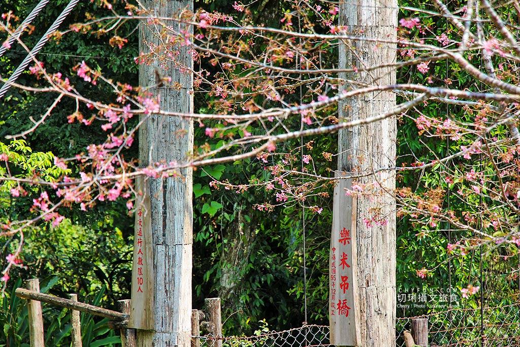 20190321055350_86 嘉義|阿里山賞櫻正旺,櫻花季二日遊美食美景趣