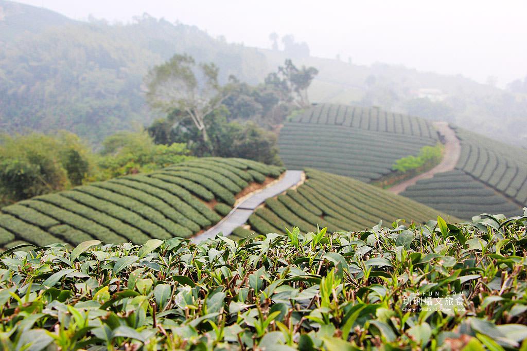 20190325031811_84 嘉義|瑞峰1314觀景台享茶園浪漫,在山頂藍天雲霧中品味茶便當