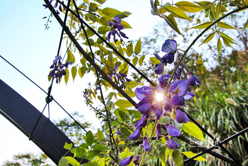 20190328095734_4 嘉義 瑞里紫藤花季,竹林茶席、咖啡體驗漫步在峰里二日遊