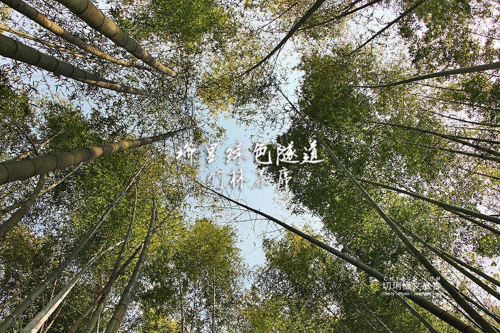 20190409014639_91 嘉義|綠色隧道竹林茶席,品茗賞藝在愜意綠漾中