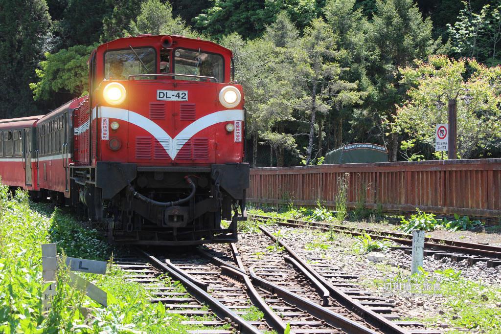 20190514220650_88 嘉義|阿里山小火車本線支線分清楚,4條森鐵行程資訊述明白