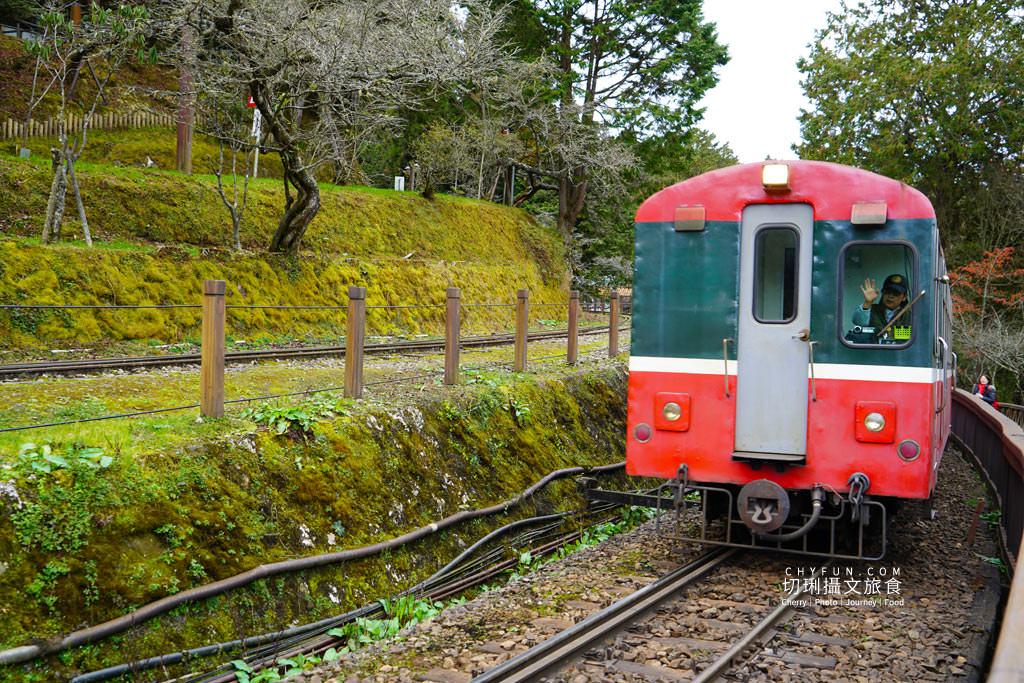 20190514220730_19 嘉義|阿里山小火車本線支線分清楚,4條森鐵行程資訊述明白