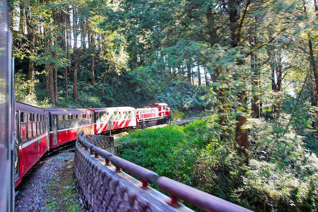 嘉義旅遊、阿里山小火車