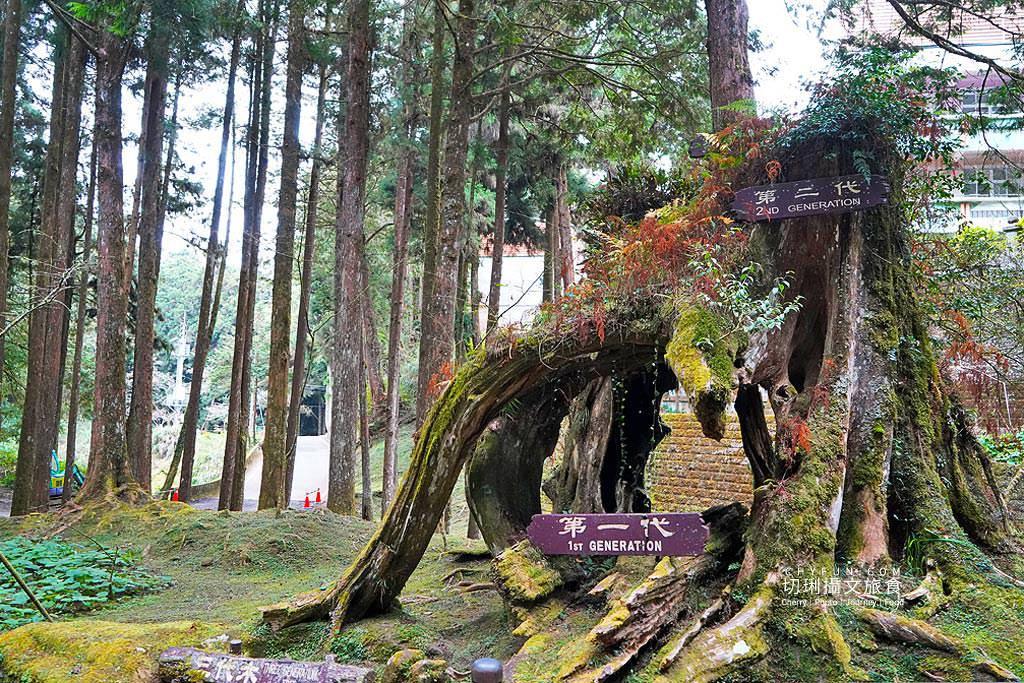 20190529073606_61 嘉義 阿里山森鐵步道健行玩樂,綠野遊蹤認識百年林業故事