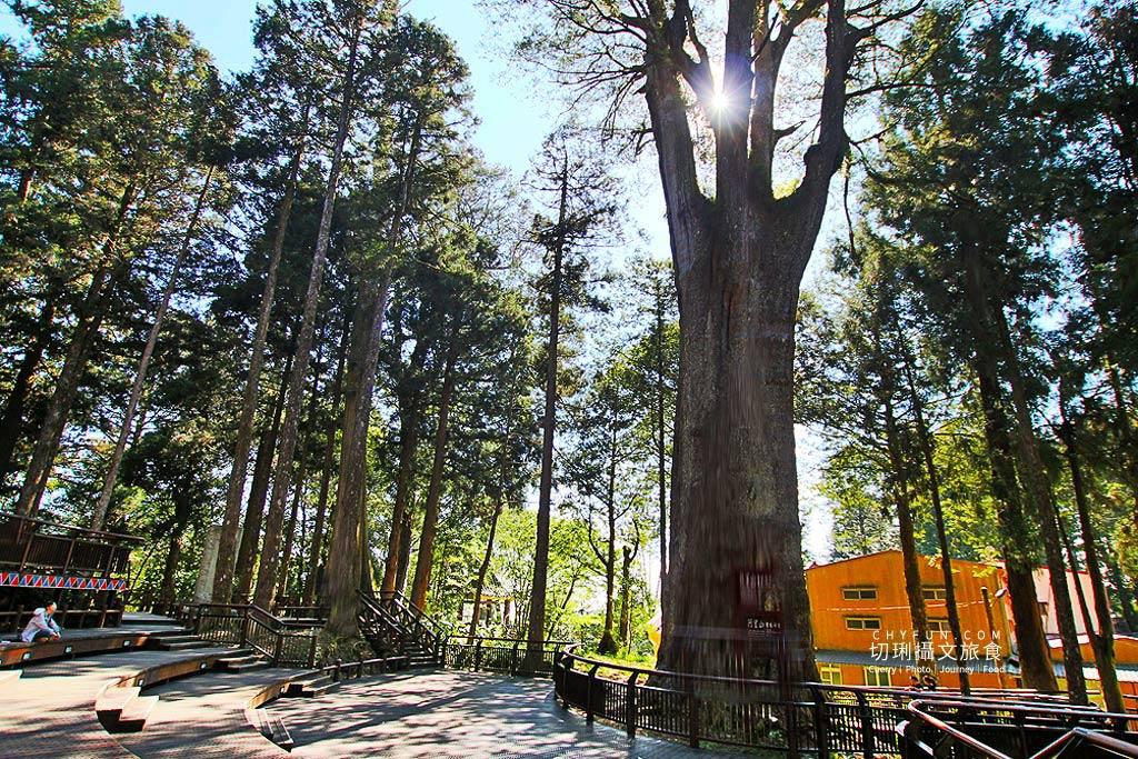 20190529073614_100 嘉義 阿里山森鐵步道健行玩樂,綠野遊蹤認識百年林業故事