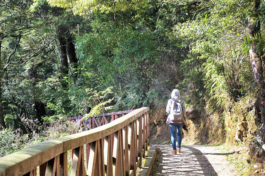 阿里山旅遊、阿里山森林步道、阿里山小火車