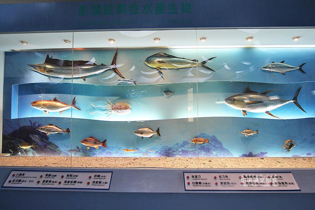 20190611005159_86 澎湖|澎湖海洋資源館,在地豐厚多元資訊的特色文化館