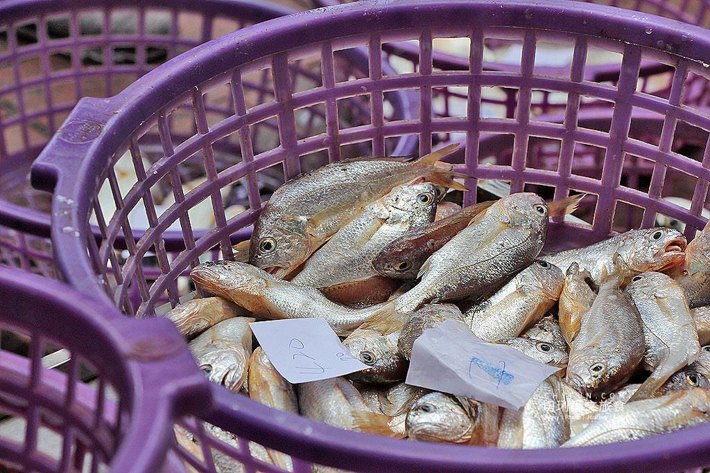 苗栗旅遊、苗栗景點、苗栗龍鳳漁港、漁港拍賣、慢魚運動