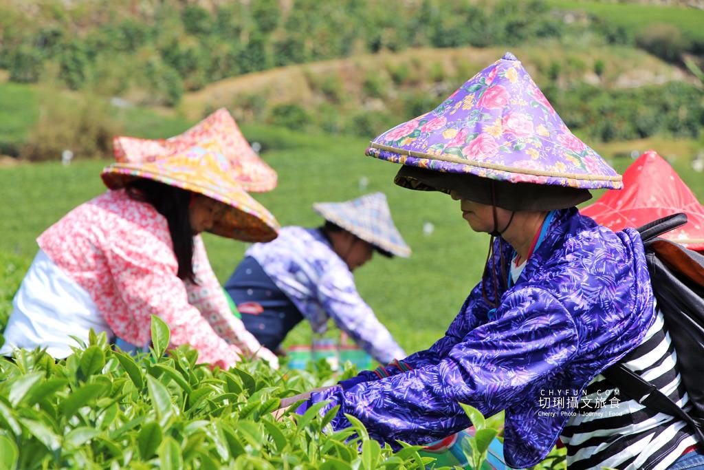 20191115080805_63 嘉義|阿里山石棹茶旅識茶道,喝一口好茶不簡單從採茶到擺席體驗茶香時節
